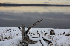 Free Driftwood On The Cold Beach Stock Images - 7040464