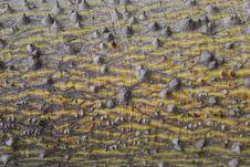 Free Bark Of Spiky Tree Royalty Free Stock Image - 7040576