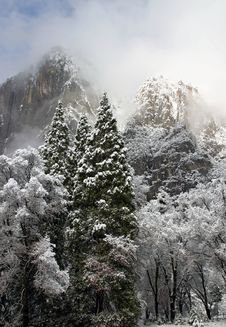 Free Snowy Christmas Trees In Yosemite Valley Stock Image - 7040831