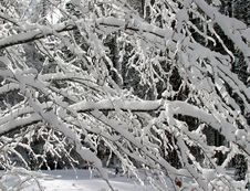 Free Snow And Ice On Tree Branches Stock Image - 7040851