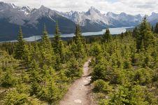Free Trail To Maligne Lake Royalty Free Stock Photo - 7041015