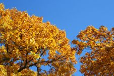 Free Autumn Yellow Leaves Royalty Free Stock Image - 7041456