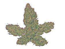 Free Marijuana Buds Stock Photography - 7041782