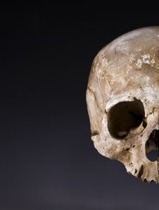 Free Old Skull Close-up With Space For Text Stock Photography - 7041842
