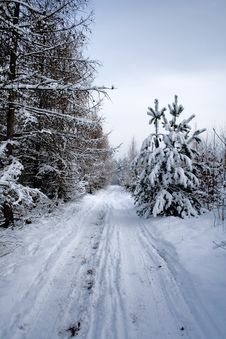 Landscape - Nowy Winter Road In Forest Royalty Free Stock Photography
