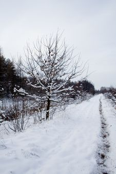Free Landscape - Snowy Winter Road Stock Photography - 7042642