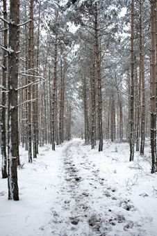Winter Landscape - Path In Snowy Forest Stock Photography