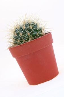 Free Cactus Stock Image - 7042811