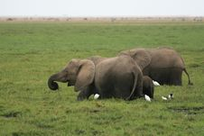 Free African Elephant Stock Photo - 7044230