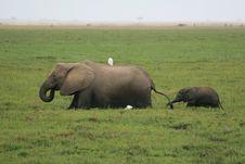 Free African Elephant Royalty Free Stock Photo - 7044335