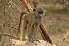 Free A Monkey Stock Images - 7044354