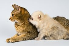 Free The Puppy With A Cat Stock Photos - 7044573