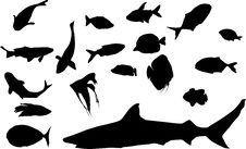Free Different Fish Silhouettes Stock Images - 7046074