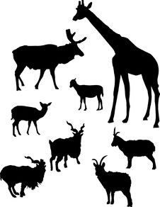 Free Horned Animals Outline Royalty Free Stock Photography - 7046077