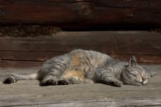 Free Resting Cat Stock Images - 7046814