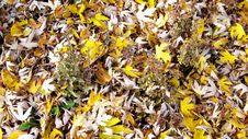 Free Autumn Foliage Stock Photo - 7047500