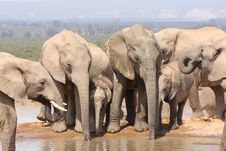 Free Photo Flanked By Two Elephants Royalty Free Stock Image - 7048276