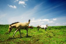 House In Grassland Stock Images