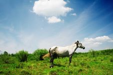 Free Horse In Grassland Stock Photo - 7048660