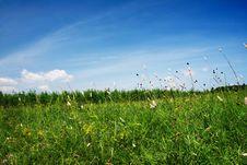 Free Grassland Stock Images - 7048694