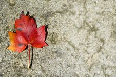 Free Autumn Leaf With Copy Space Stock Image - 7049261