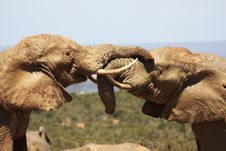 Free Two Muddy Elephants Royalty Free Stock Photos - 7049588