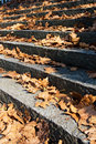 Free Autumn Step Royalty Free Stock Images - 7051889