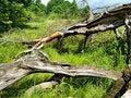 Free Old Tumbled Oak Stock Photography - 7051962