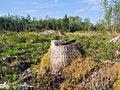 Free Chopping Wood Royalty Free Stock Photos - 7052348