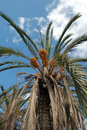 Free Palm Trees Vertical View Stock Images - 7054294