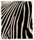 Free Zebra Skin Stock Photo - 7056830
