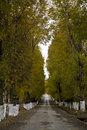 Free Road With Trees Royalty Free Stock Photos - 7057978