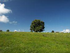 Free Single Tree. Stock Photos - 7050133