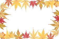 Free Autumnal Acer Leaf Frame Stock Image - 7050801