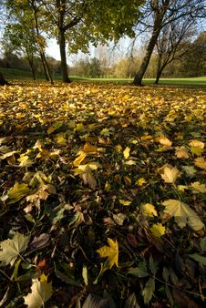 Free Leaves On The Ground Royalty Free Stock Images - 7050999