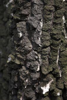 Free Tree Bark Stock Photography - 7051142