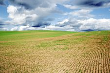 Free Agricultural Field Royalty Free Stock Photo - 7051335