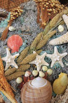Free Colorful Seashells Assortment Stock Photo - 7051580