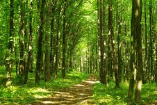 Free Green Forest Stock Images - 7051594