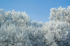 Free Frozen Trees Stock Images - 7051764