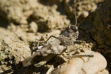 Free Grasshopper Stock Photo - 7052530