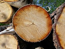 Free Sawn Up Tree Stock Images - 7053114