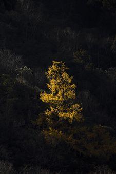 Free Tree Under Sunshine Royalty Free Stock Photos - 7053838