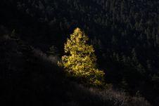 Free Tree Under Sunshine Royalty Free Stock Image - 7053846