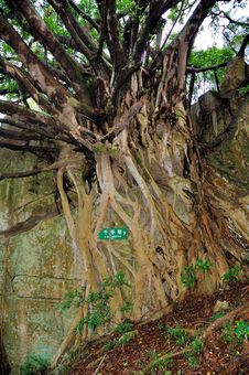 Free Root Stock Photo - 7053930