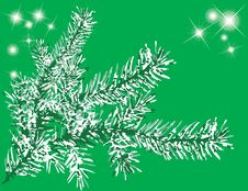 Free Needles Fir With Star Light. Stock Image - 7054331