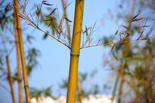 Free Bamboo Stock Photos - 7054433
