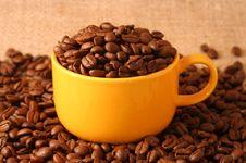 Free Coffee Stock Photo - 7054580