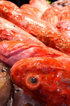 Free Red Fish Royalty Free Stock Photography - 7054967