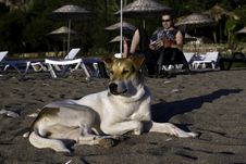 Free Dog On Tropic Beach Stock Image - 7055321